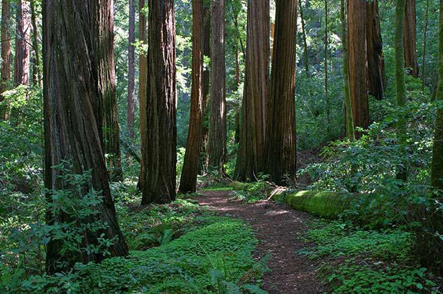 Santa Cruz California Northern California Redwoods