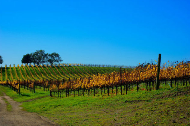 Santa Cruz Mountain Wines Northern California wines